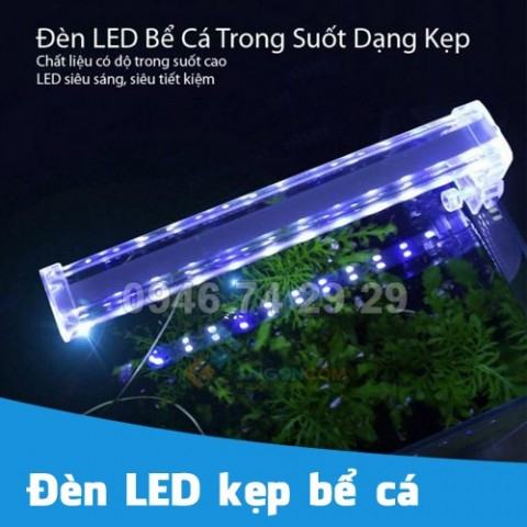 Đèn LED kẹp bể cá, hồ cá cảnh mini