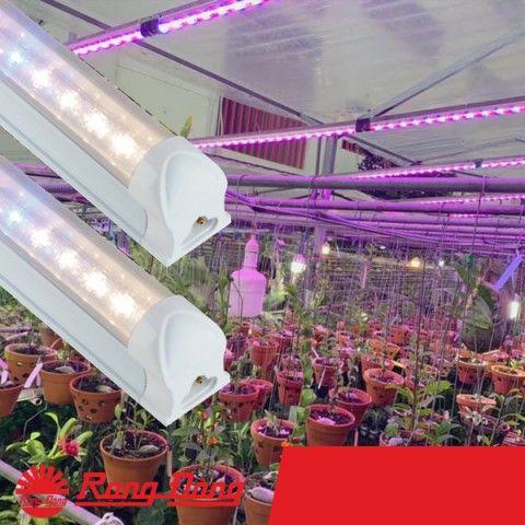 Bóng Đèn LED cây phong lan - Rạng Đông - NCM-20/25W-WBU